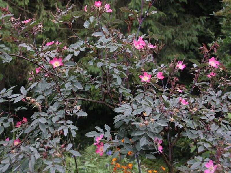 Schöne Kletterpflanzen lory naturgarten galerie pflanzenportraits und kletterpflanzen